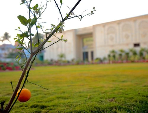 Karachi Campus Auditorium Wins Second Prize at Pakistan Flower Show