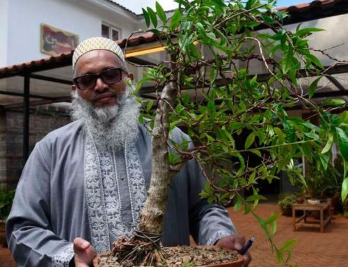 An Educator and his Passion for Bonsai